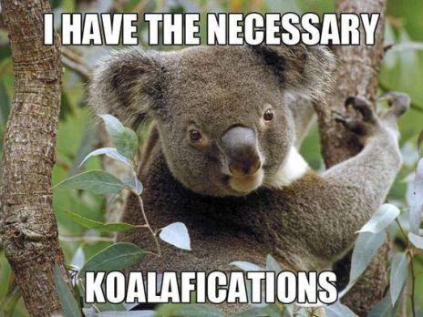 koala for blog